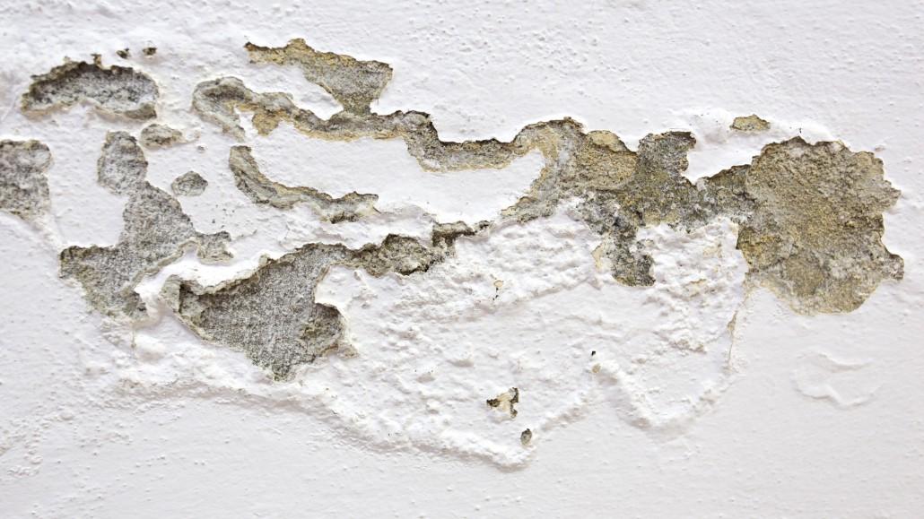 Jak zlikvidovat plísně na stěně